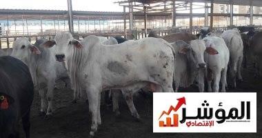 صورة تجار الأضاحى ببورسعيد: حركة البيع ضعيفة والأضحية يشترك بها أكثر من 3 أشخاص