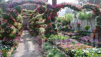 صورة انطلاق النسخة الأولى من معرض زهور الخريف