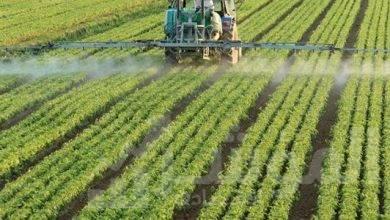 """صورة """"الزراعة""""و""""يونيدو""""يطلقان حملة توعية للتداول الآمن للمبيدات"""
