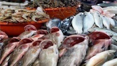 صورة استقرارأسعارالأسماك بسوق العبوراليوم الاثنين