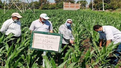صورة وكيل «زراعة البحيرة» يتفقد حقول الذرة.. ويؤكد ترشيد استهلاك المياه