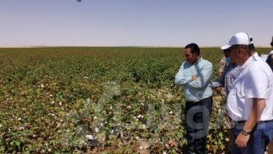 صورة وزير قطاع الأعمال العام يتفقد تجربة زراعة القطن قصير التيلة بشرق العوينات*