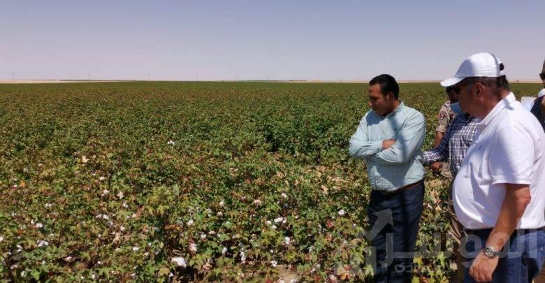 """"""" توفيق """" يتفقد تجربة زراعة القطن قصير التيلة بشرق العوينات"""