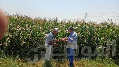 صورة محافظ أسيوط : متابعة مستمرة لخطة تطوير مزارع الثروة الحيوانية