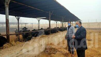 صورة محافظ أسيوط : استكمال خطة تطوير مزارع الثروة الحيوانية وجولة تفقدية للسكرتير المساعد بمزرعة بنى سند