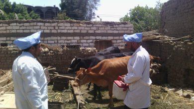 صورة أسيوط ..انطلاق الحملة القومية الثانية لتحصين 111 ألف رأس ماشية و46 الف رأس اغنام