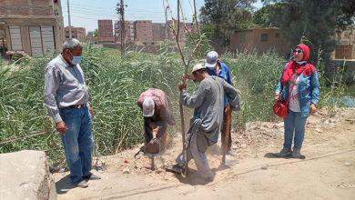 """صورة استمرار حملات التشجير بمحافظة أسيوط ضمن المباردرة الرئاسية """" اتحضر للاخضر """""""