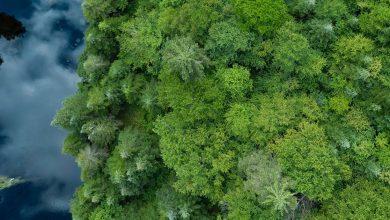 صورة نستله تعلن عن استراتيجية جديدة لتجديد واستعادة الغابات وتعززاستخدامها للأقمار الصناعية لمتابعتها