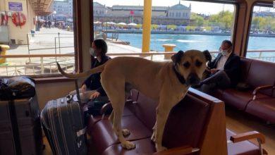صورة كاميرا ترصد كلبا يستخدم وسائل النقل بمفرده للتنزه يوميًا في أسطنبول