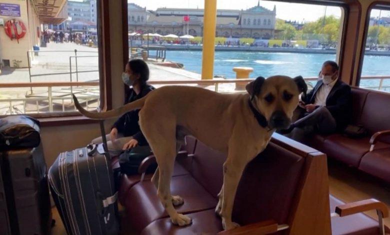 كاميرا-ترصد-كلبا-يستخدم-وسائل-النقل-بمفرده-للتنزه-يوميًا-في-أسطنبول