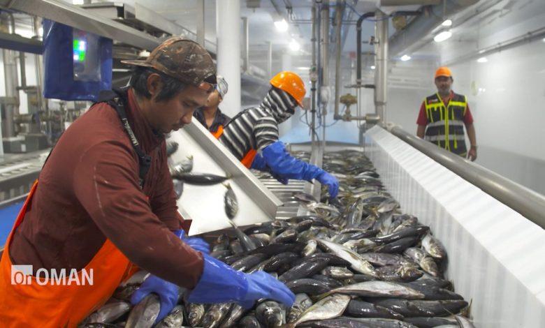 شاهد.-خطط-سلطنة-عُمان-لغزو-أسواق-الأسماك-العالمية-بطريقة-مستدامة