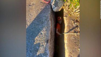 صورة شاهد ما حدث لكلب سقط في صدع ضيق على عمق 40 قدمًا