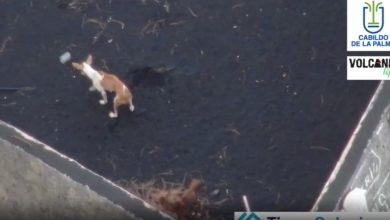 صورة طعام يتساقط من السماء على كلاب حاصرتها الحمم البركانية.. شاهد كيف