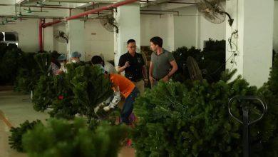صورة نقص أشجار عيد الميلاد وسط أزمة سلسلة التوريد العالمية