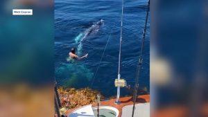 رحلة-اعتيادية-لصيد-تونة-زرقاء-تتحول-إلى-إنقاذ-حوت-مقيد-في-قاع-البحر